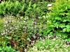 Diverse planten (Custom)