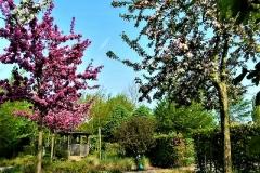Grassen- en bloementuin